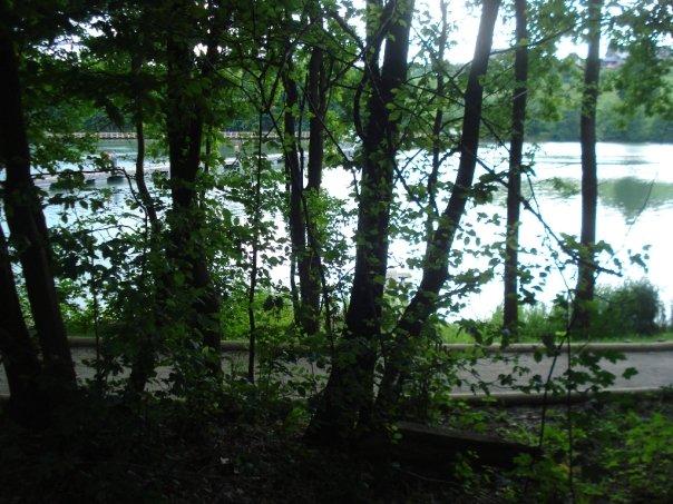 Drevesa diskretno obdajajo naš prostor za piknik